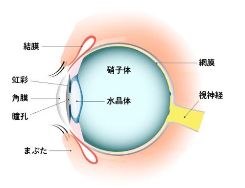 の で 目 コンタクト 紛失 中 コンタクトレンズが目の中で行方不明になることはありますか?