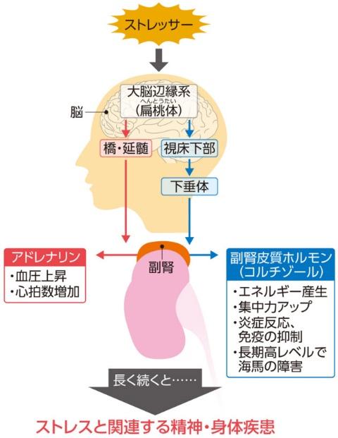 ストレス:ストレス性のうつ、不眠、頭痛は「漢方」で重症化 ...