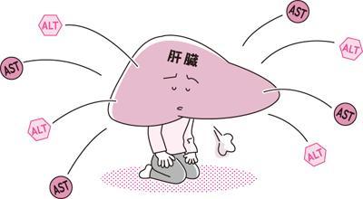 ALT(GPT):病院で受ける検査事典:日経Gooday(グッデイ)